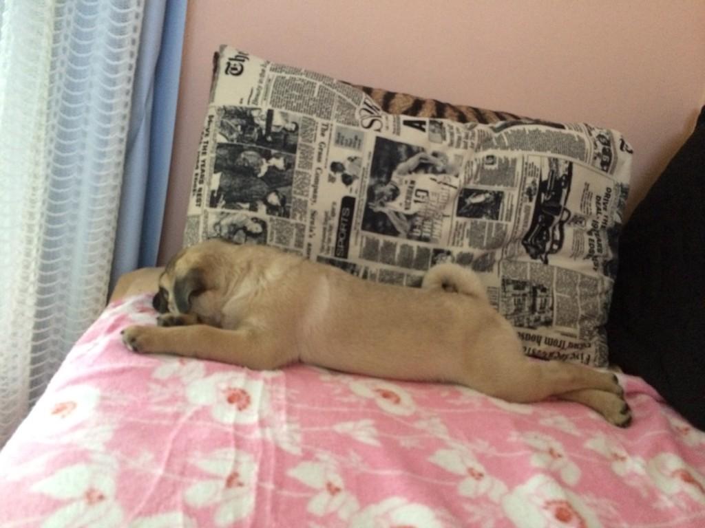 Com as patas cruzadas, Sócrates aproveita um momento de descanso (Foto: Acervo pessoal/Luana Prado)