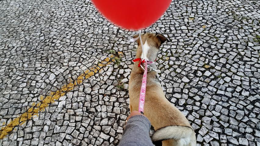 Com apenas 15 minutos você já podia ajudar a melhor o dia de um cão abandonado, e ele podia ajudar a melhor o seu  (Foto: Fernanda Tieme Iwaya)
